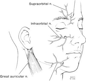 Major sensory nerves of the face encountered during rhytidectomy and related procedures